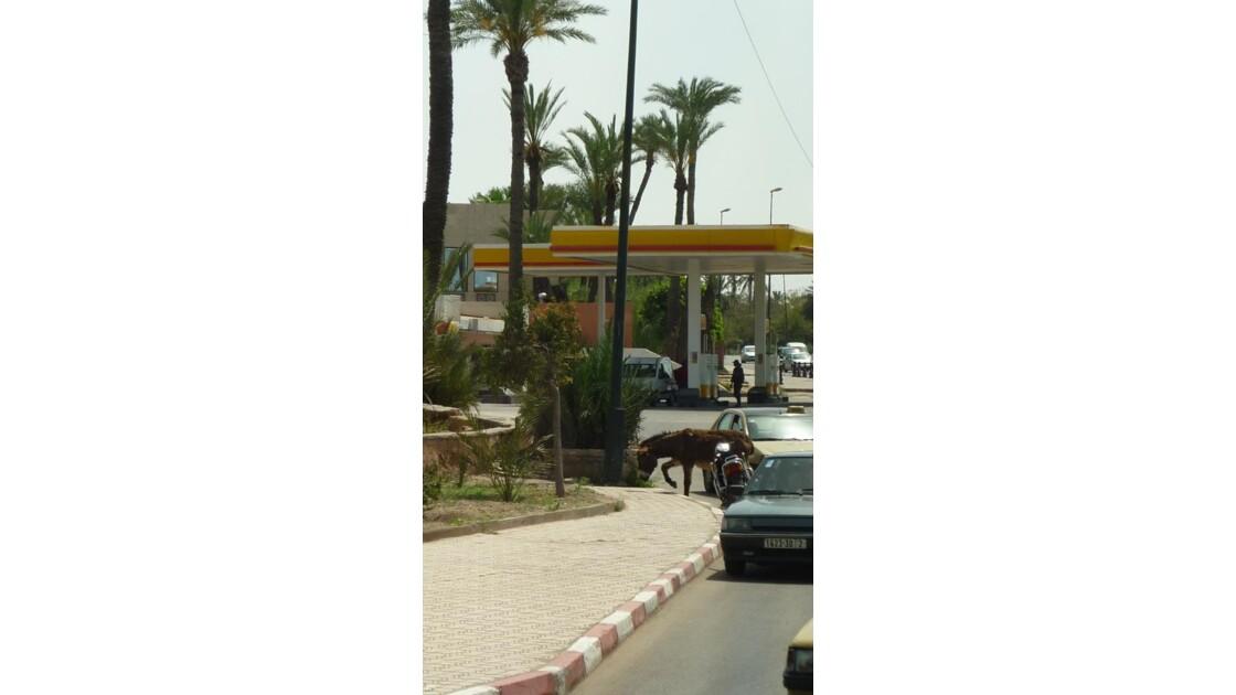 L'âne vient de traverser la route