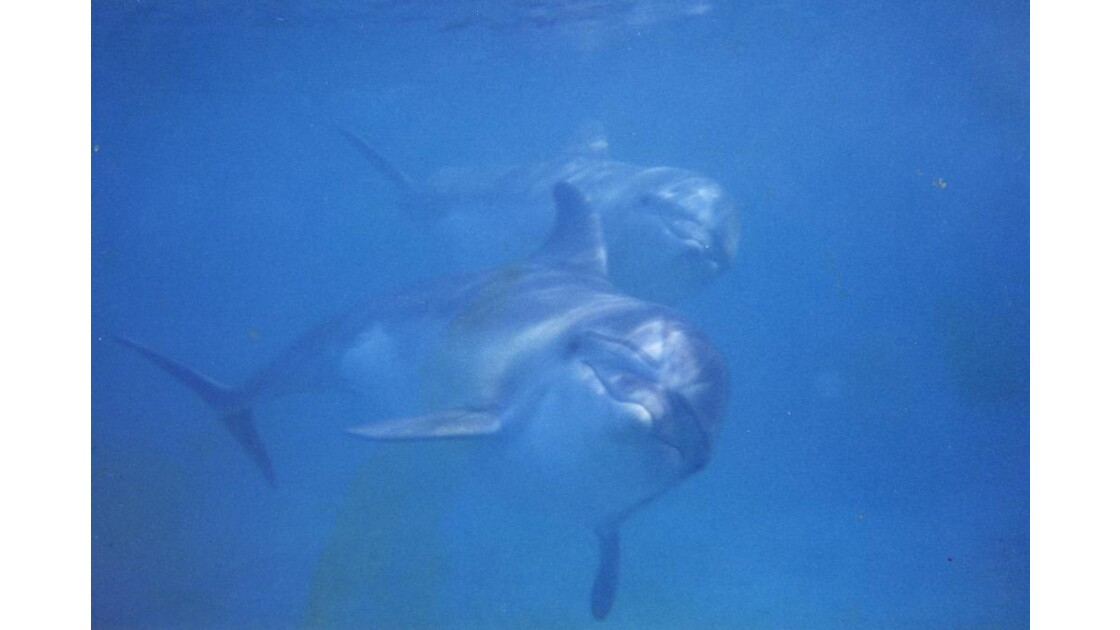 Dauphins au Dolphin Reef à Eilat, Israël