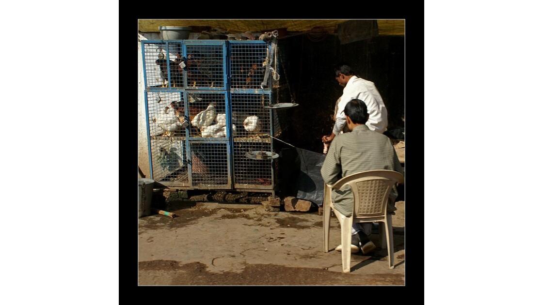 Le vendeur de poules