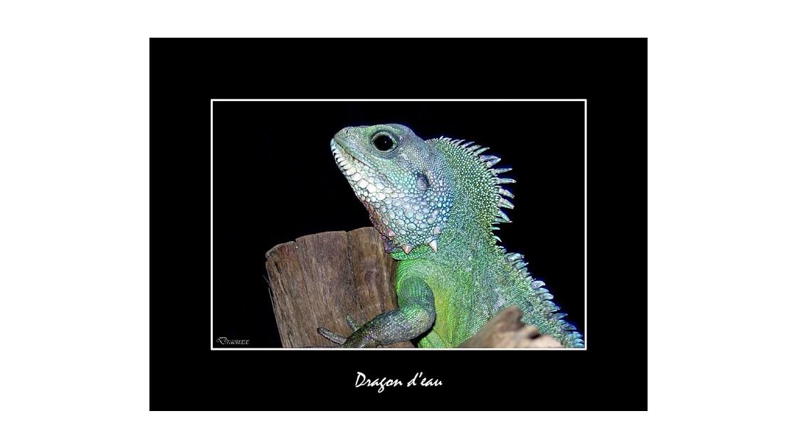 Dragon d'eau.jpg