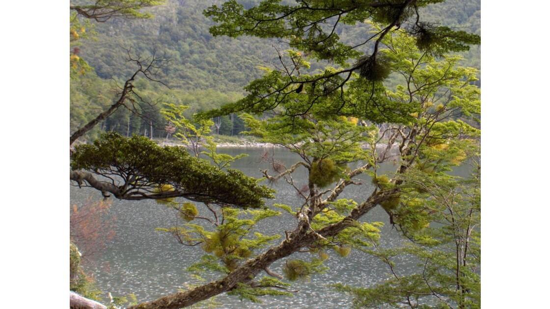 Terre de Feu - Lago escondido