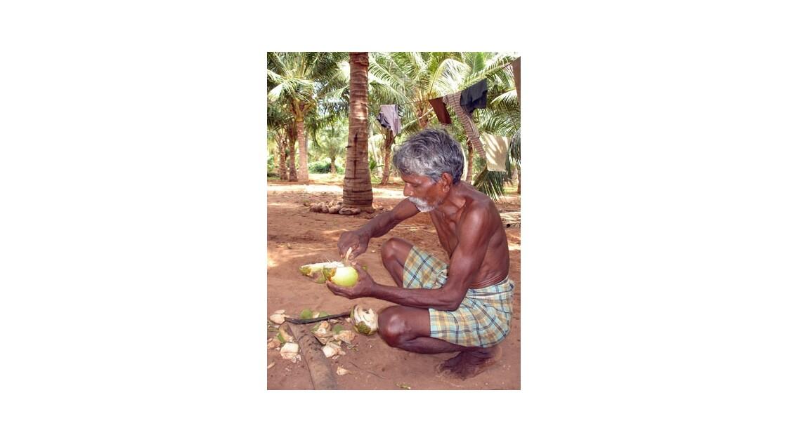 La noix de coco…