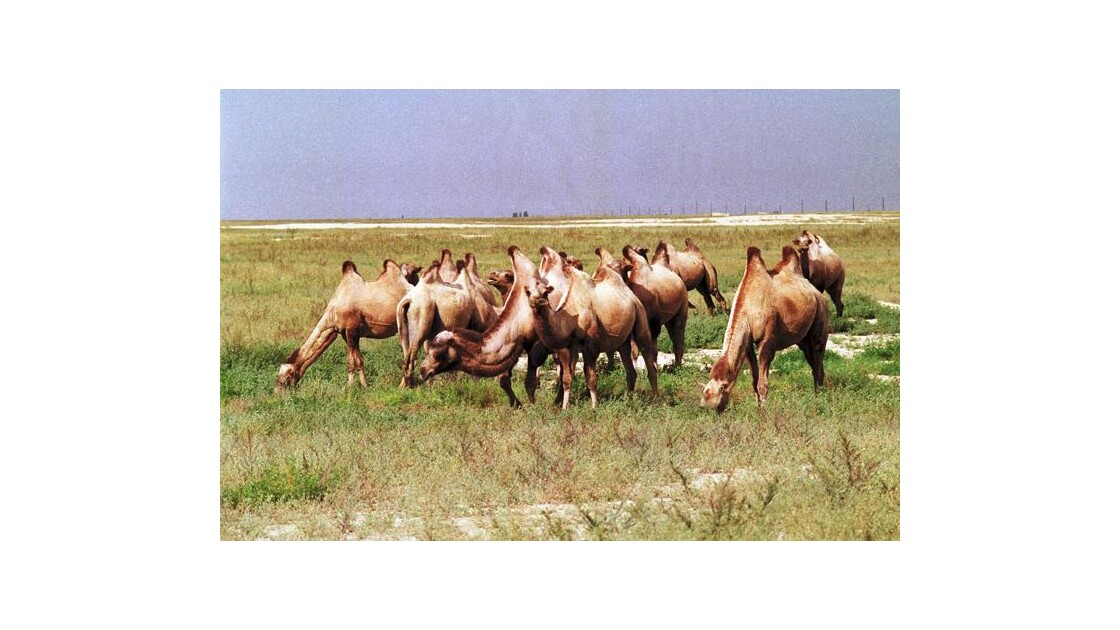 On the Silk Road 1987 - 21