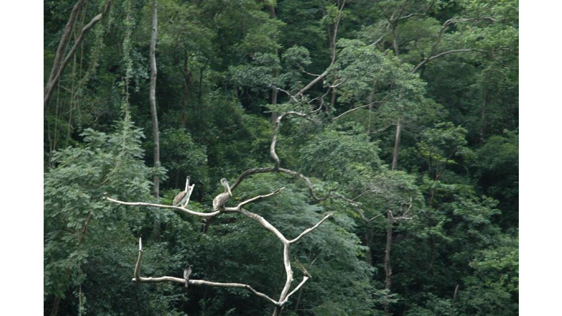 Sur un arbre perché.