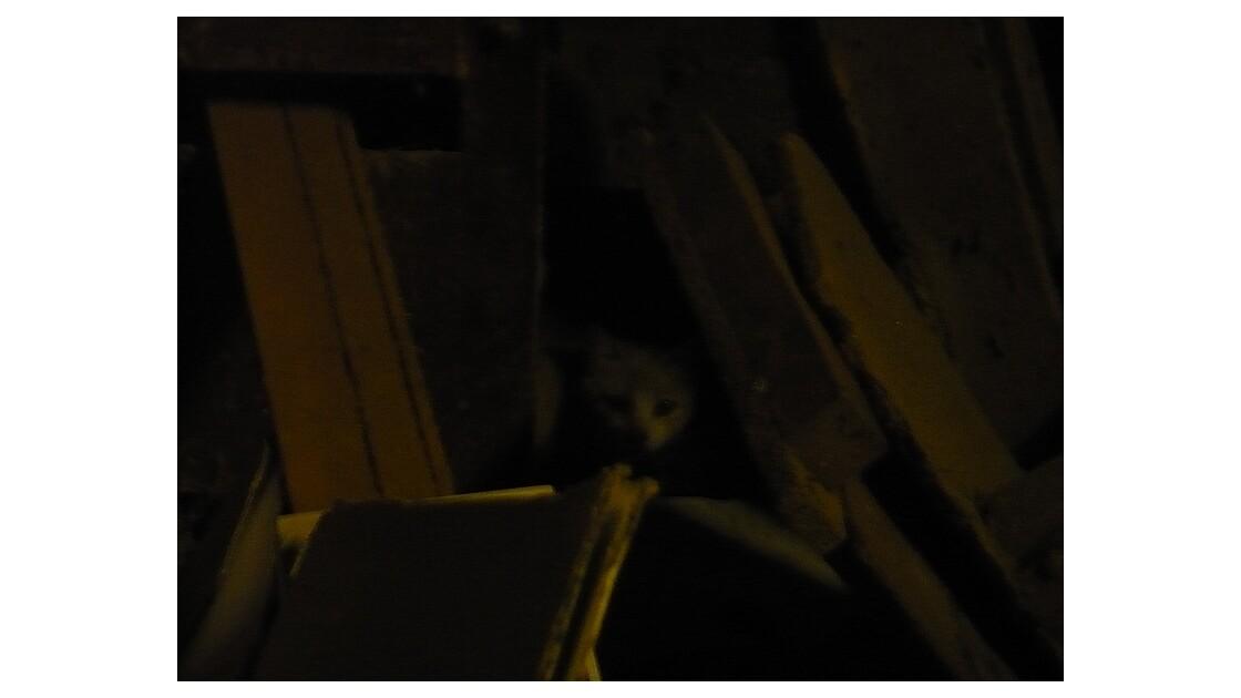 chat aux aguets