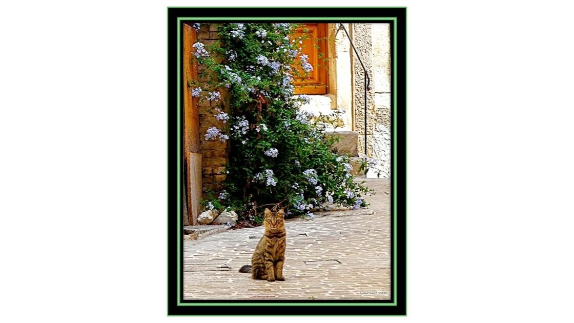 Chat Tigré... toujours aussi Intrigué...