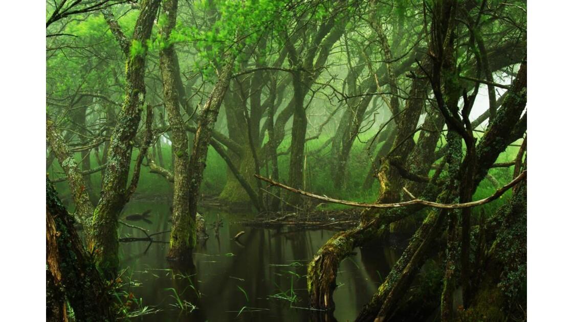 mangrove ou presque