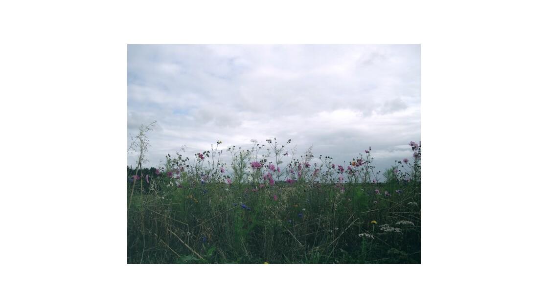 quelques fleurs sauvages
