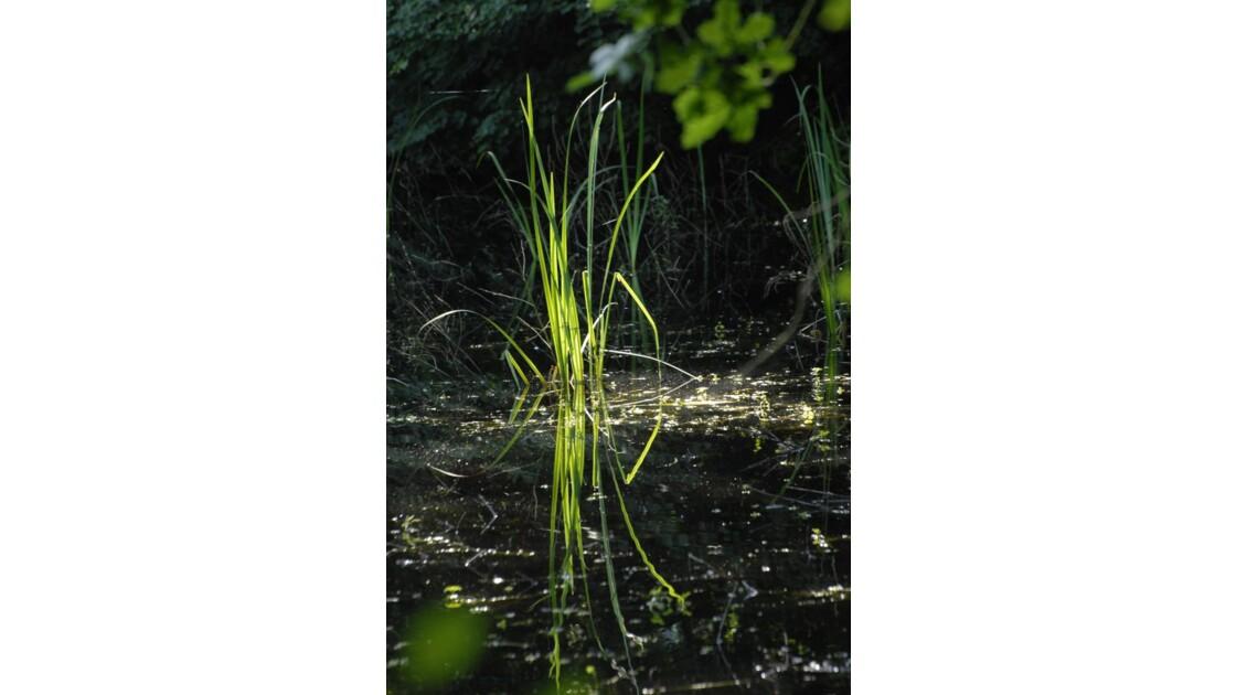 Brin d'herbe lumineux
