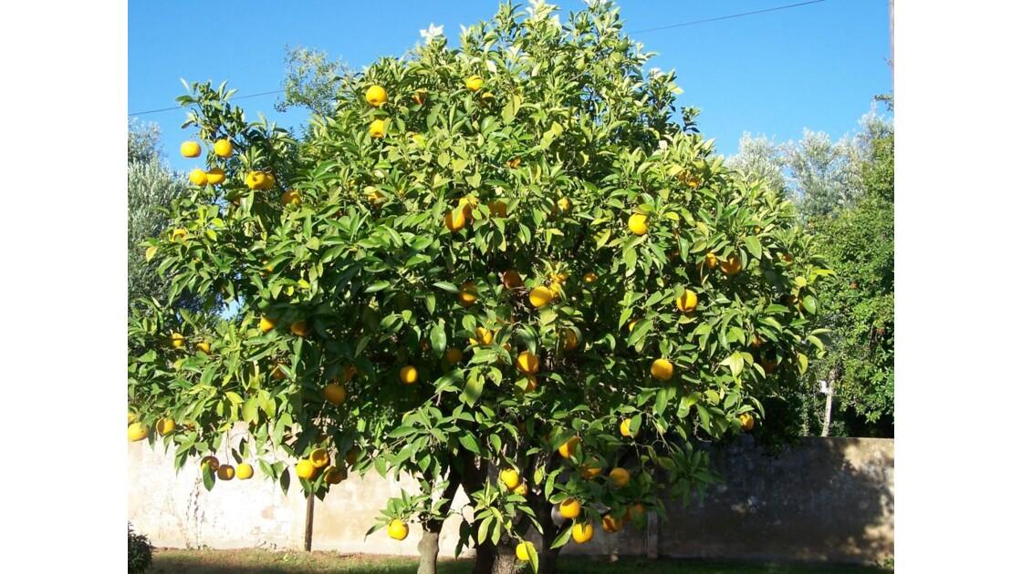 oranger