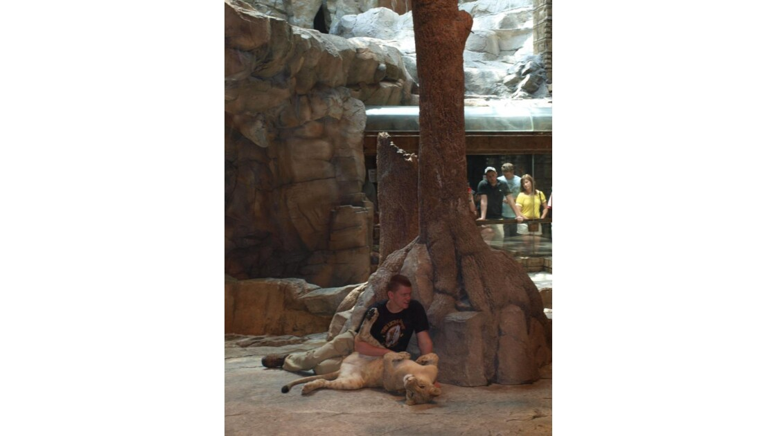 Lionne du MGM