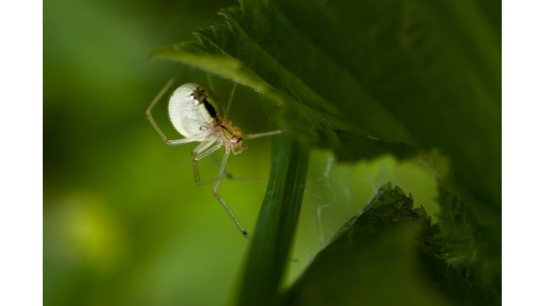 arachnide_1.jpg