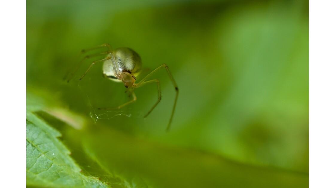 arachnide_2.jpg