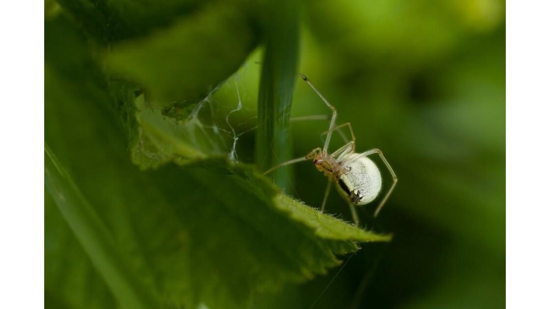 arachnide_3.jpg