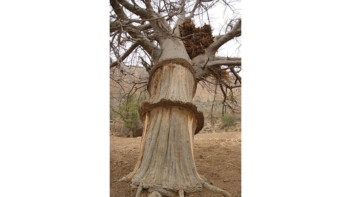 Le grenier baobab