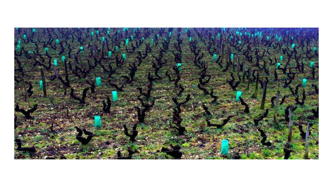 Bourgogne hivernale