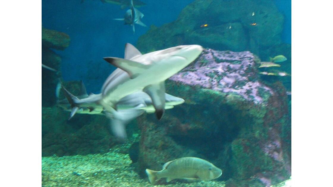 Aquarium_Gwada__15_.JPG