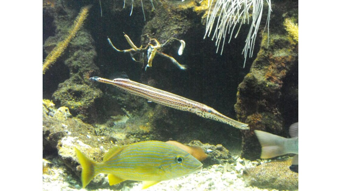 Aquarium_Gwada__26_.JPG