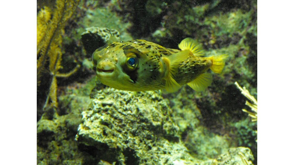 Aquarium_Gwada__7_.JPG