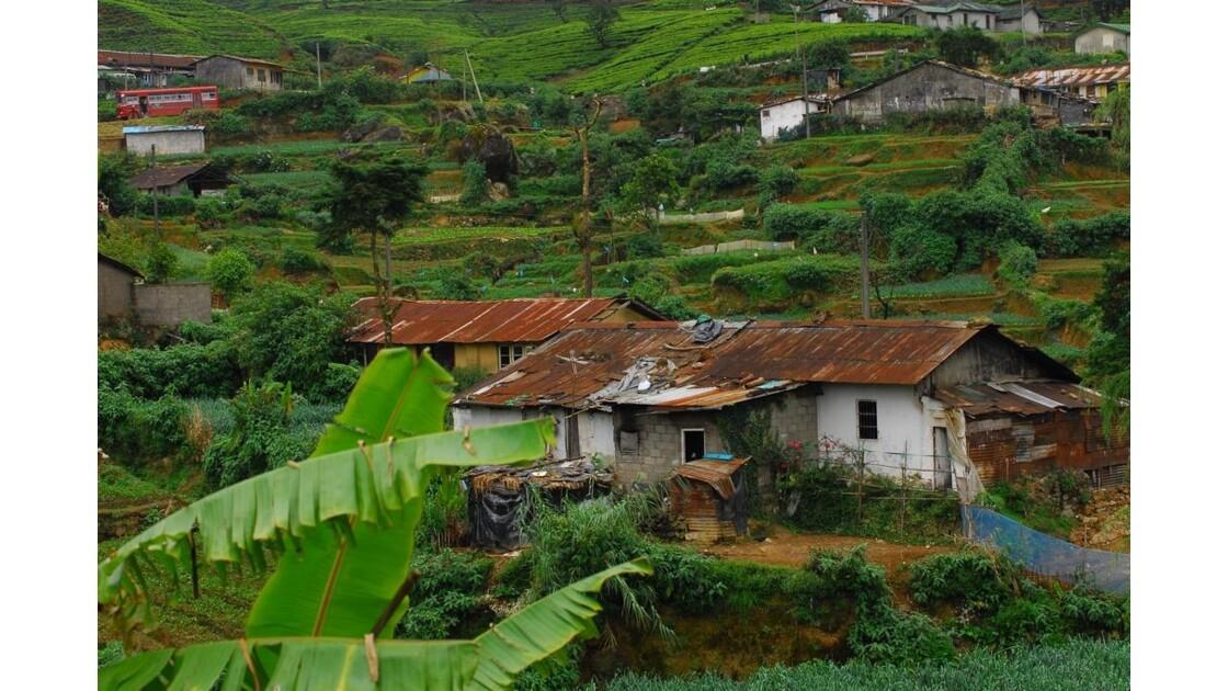 Sri_Lanka__48_.JPG