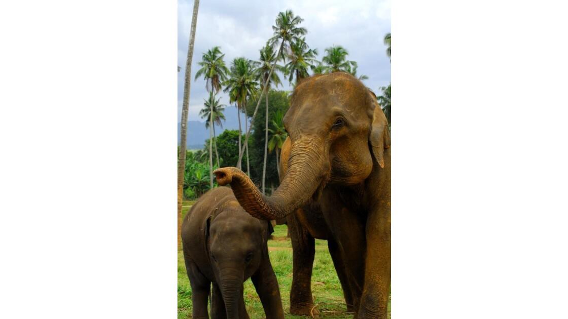 Sri_Lanka__52_.JPG