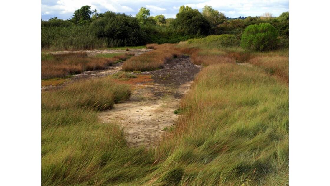 le marais en été