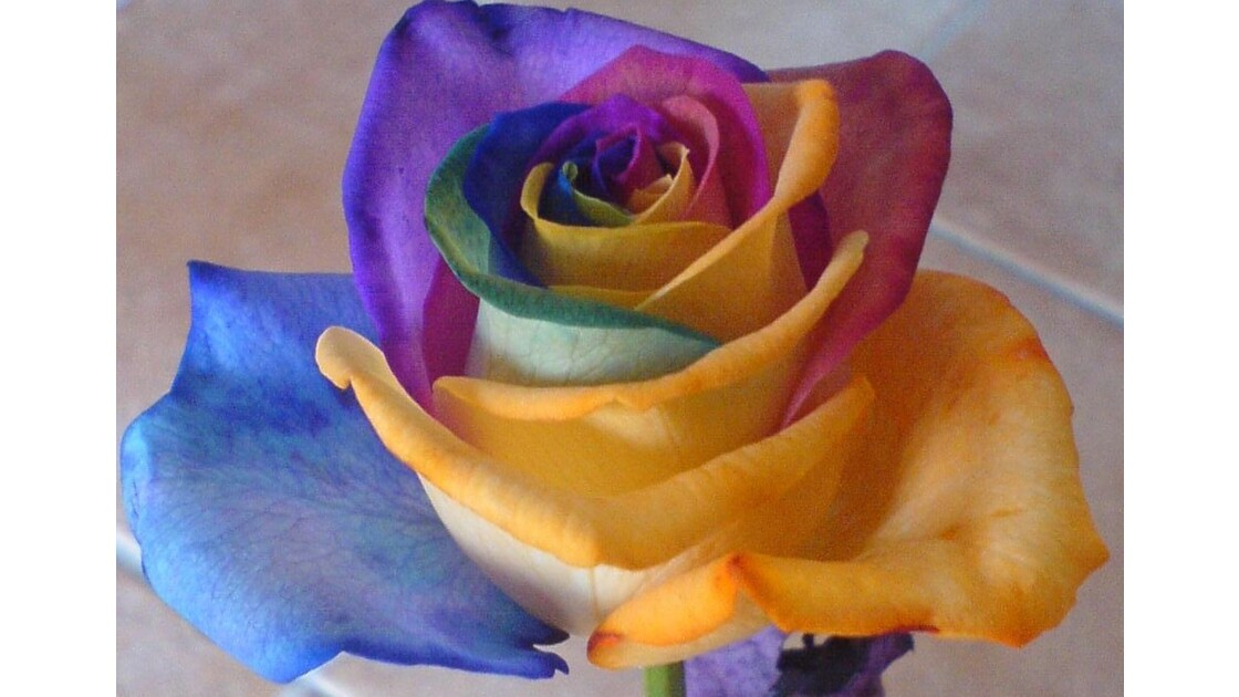 rose hollandaise