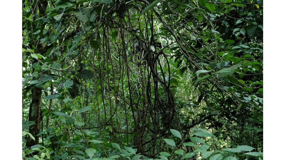 Dans la jungle.