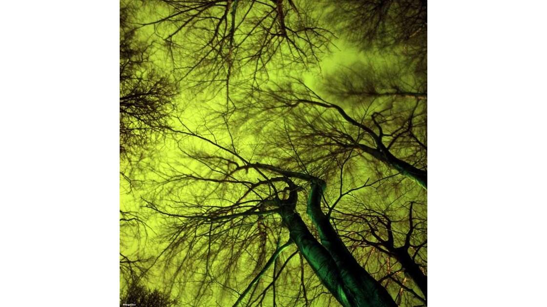 La nuit , la Ville et ses arbres