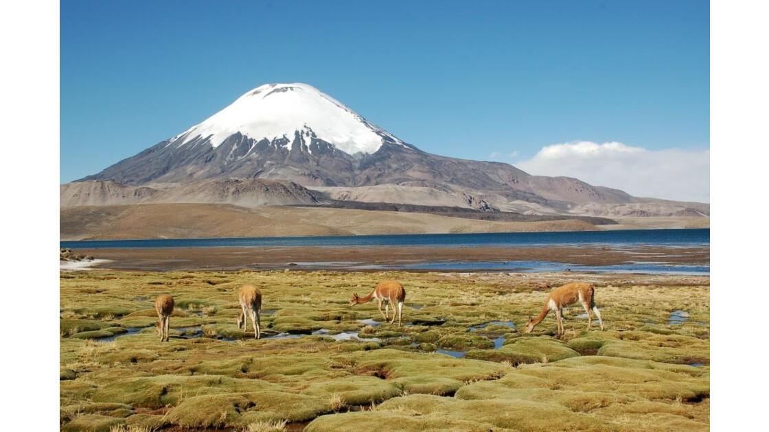 Bolivie_Chili1300.JPG