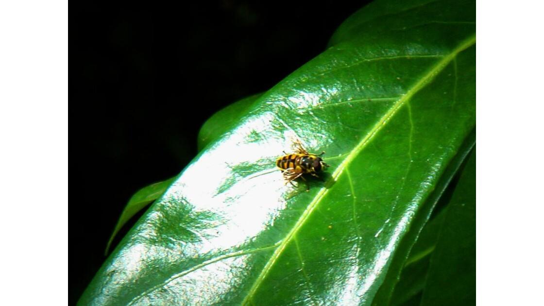 Feuille et insecte
