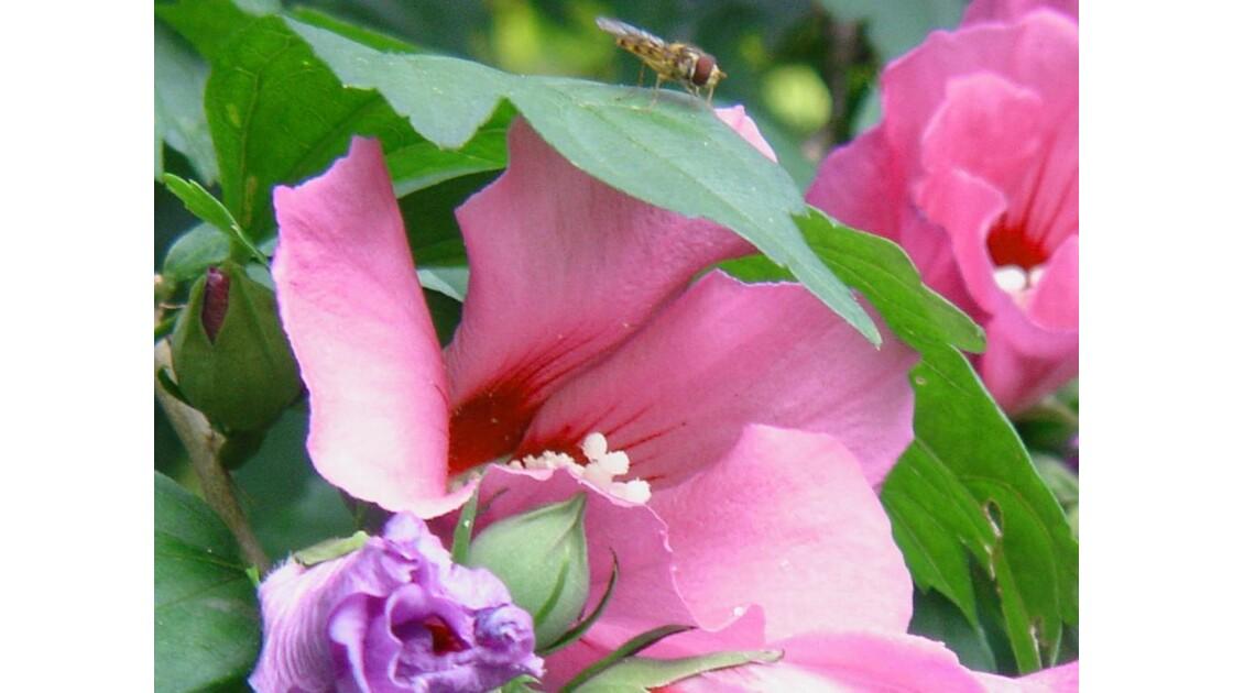 Fleurs et insecte