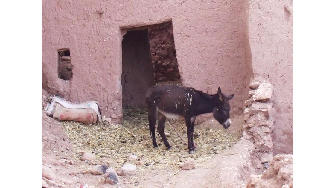 Le petit âne brun