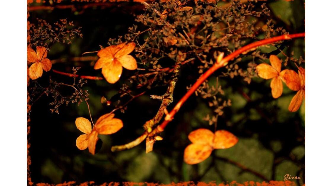 Petites feuilles rousses, pour CHANTAL