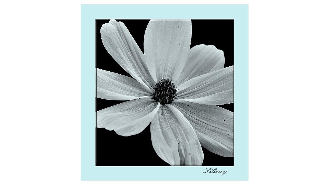 simple fleur