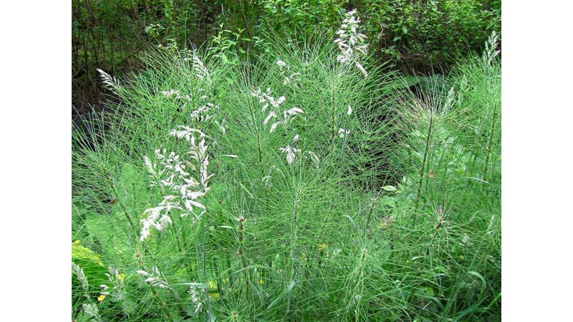 Herbes folles et herbes fines