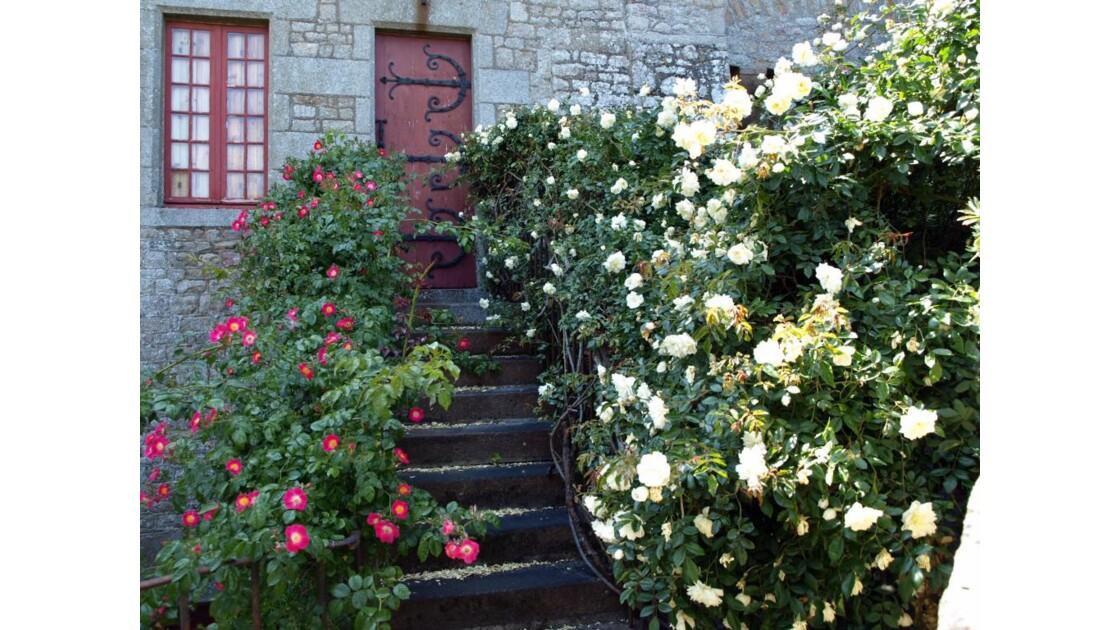 Les roses du Mont