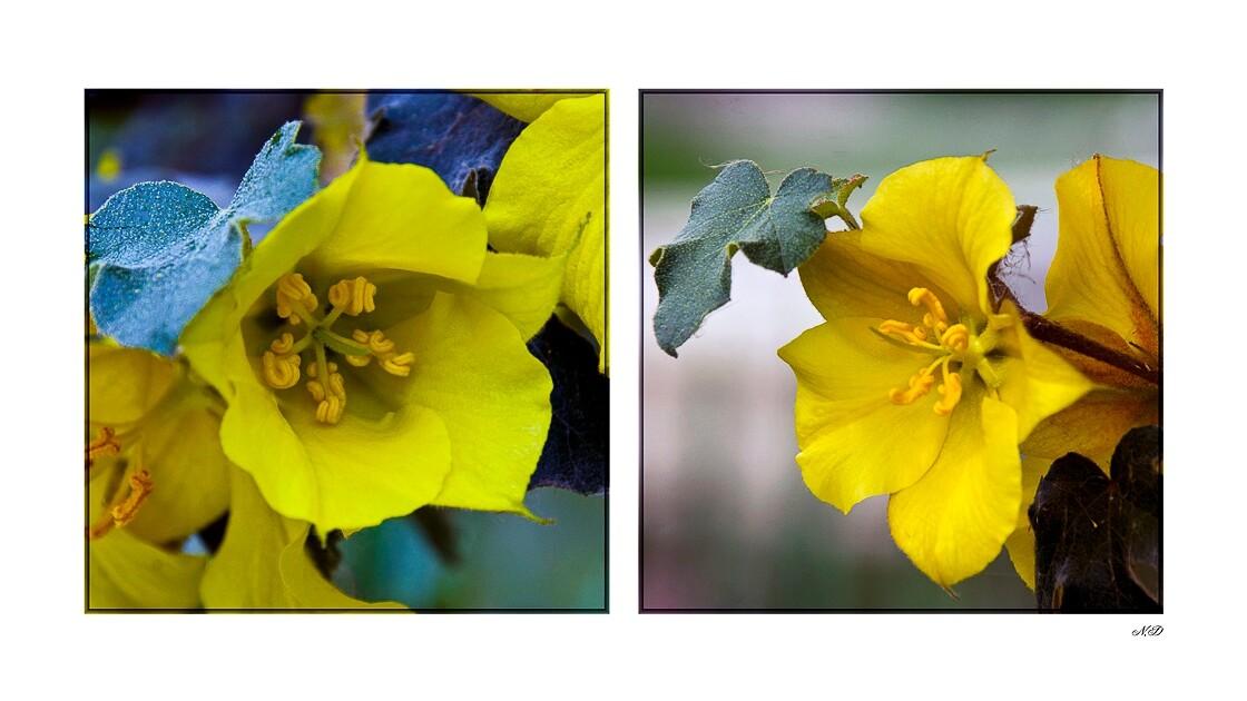 De grosses fleurs jaunes !!!