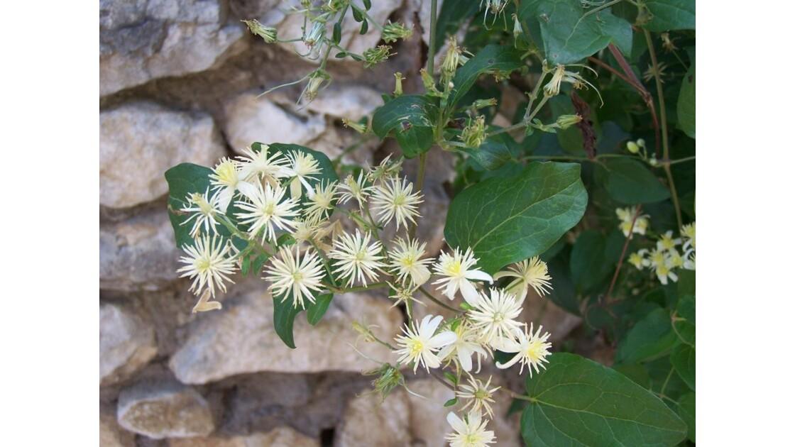 fleurs au mur