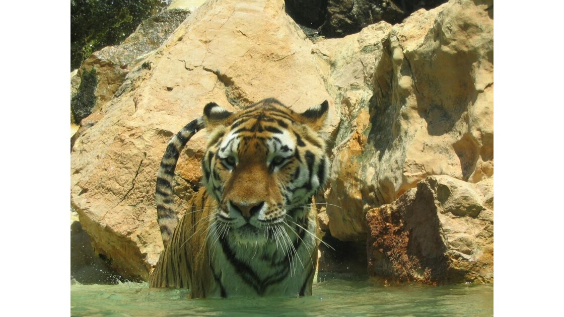 Au bain: Zoo de la Barben 13