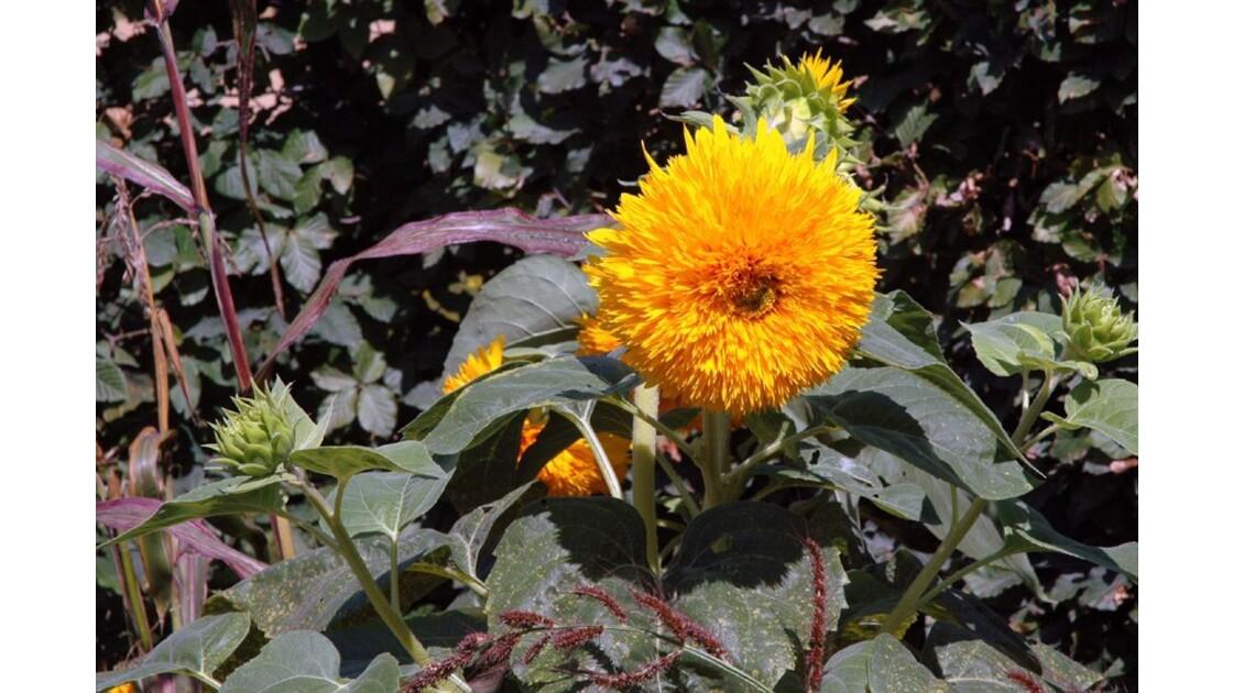 Fleur jaune ...