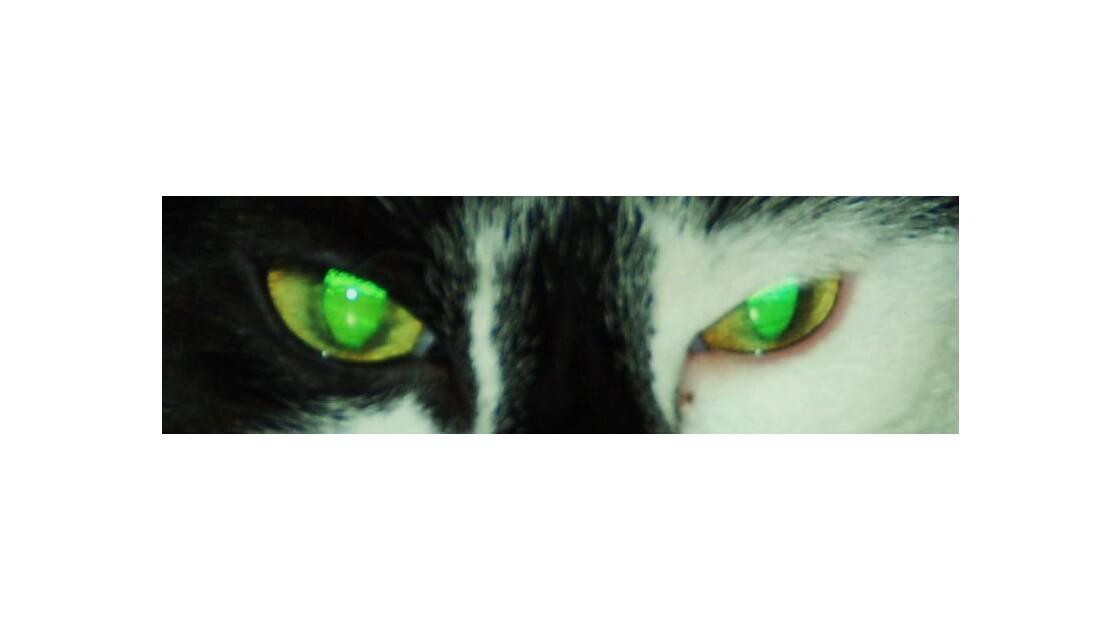 Des yeux de chat!