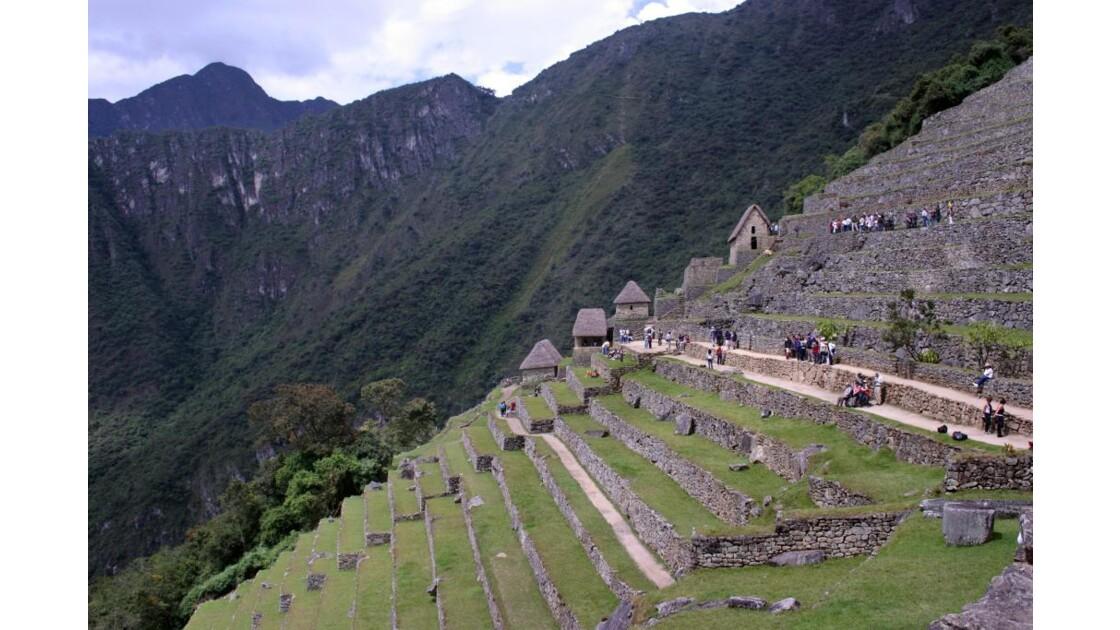 Pérou : Terrasses à Machu Picchu