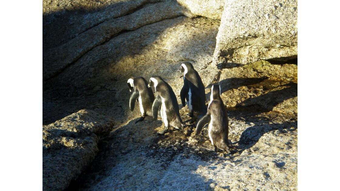 queue-le-le de pingouins