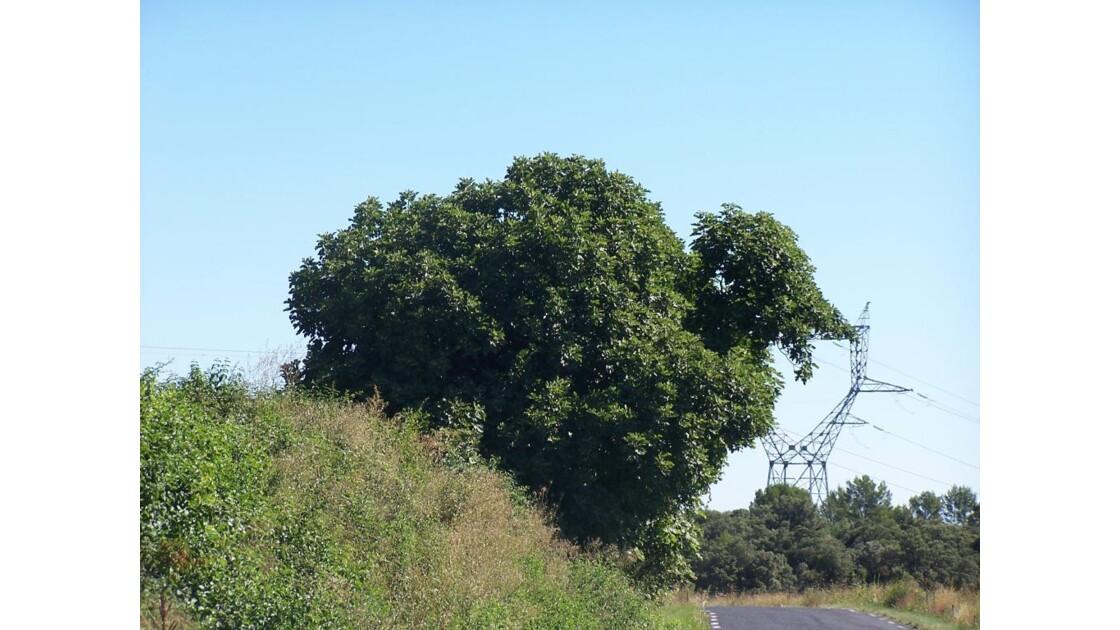 arbre bizare :non??