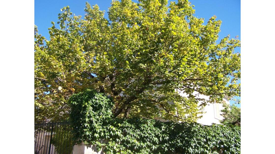 un arbre dans un village