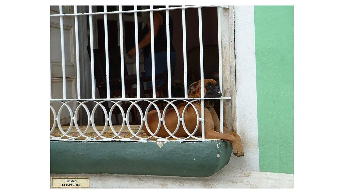 chien. au balconJPG