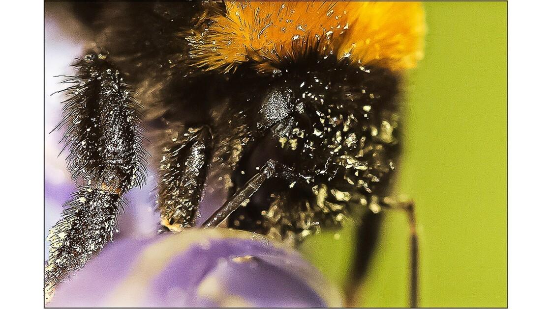 Aveuglé par le pollen !!!