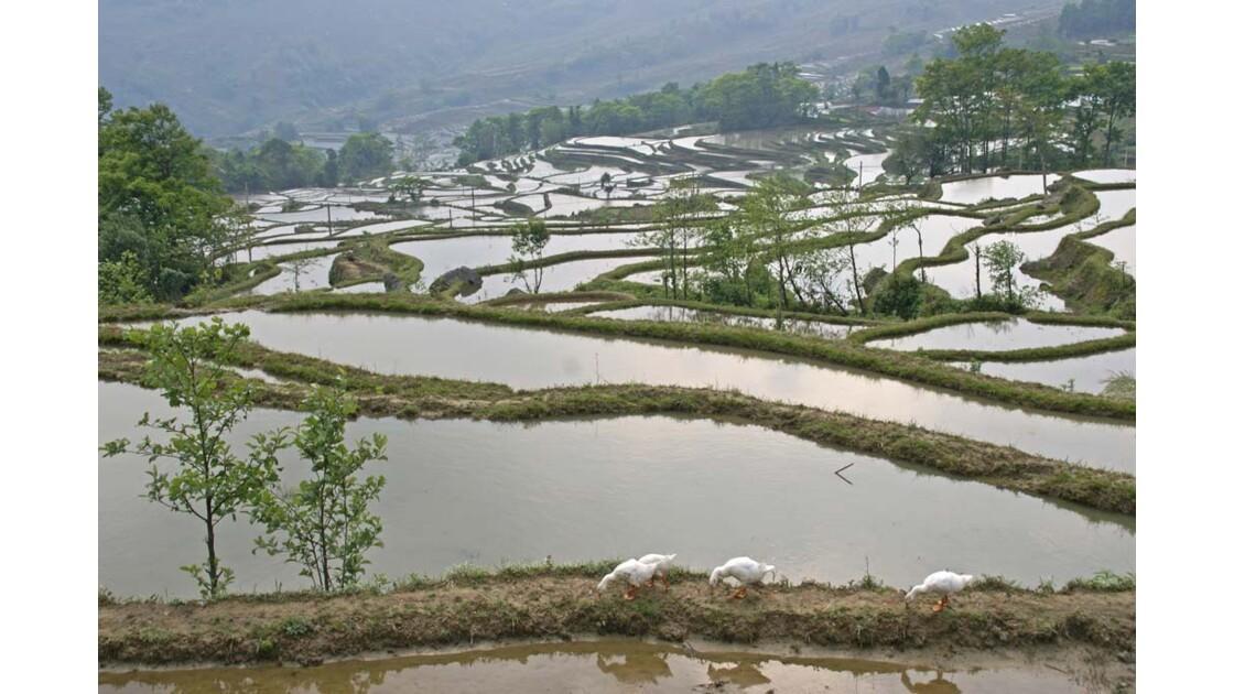 Rizieres au dessus de Qingkou