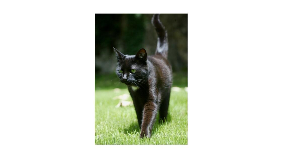 Le chat en vadrouille